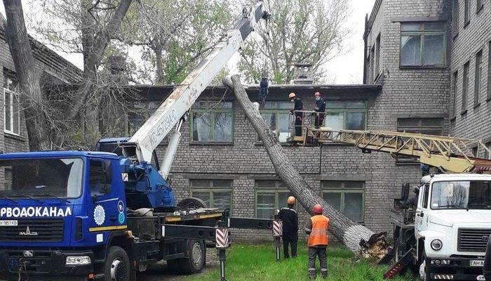 Последствия шторма. В Мариуполе 15-метровое дерево чуть не разрушило детский сад, - ФОТО, фото-1