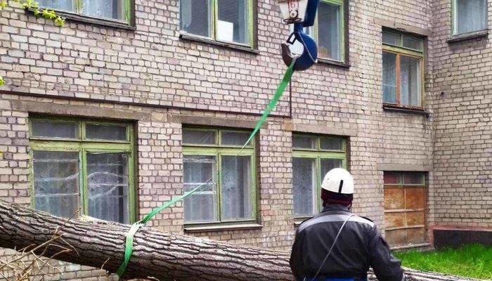 Последствия шторма. В Мариуполе 15-метровое дерево чуть не разрушило детский сад, - ФОТО, фото-2