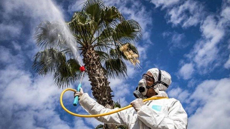 Остановит ли солнце пандемию коронавируса. Что говорят эксперты, фото-2