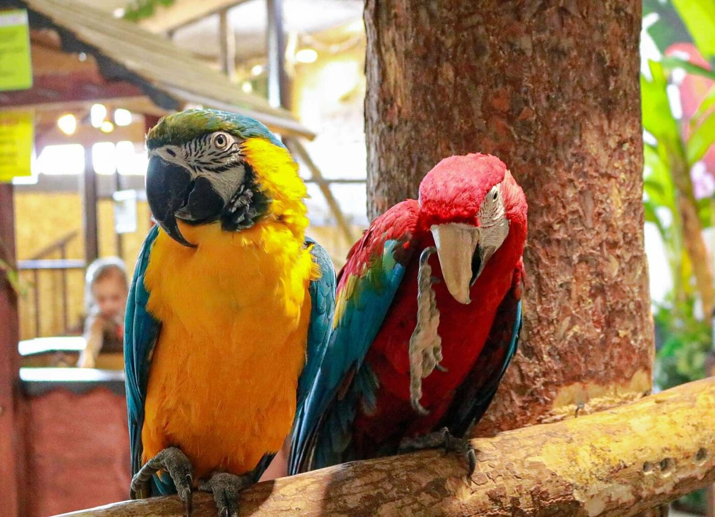 Контактный зоопарк просит помощи на время карантина!, фото-6