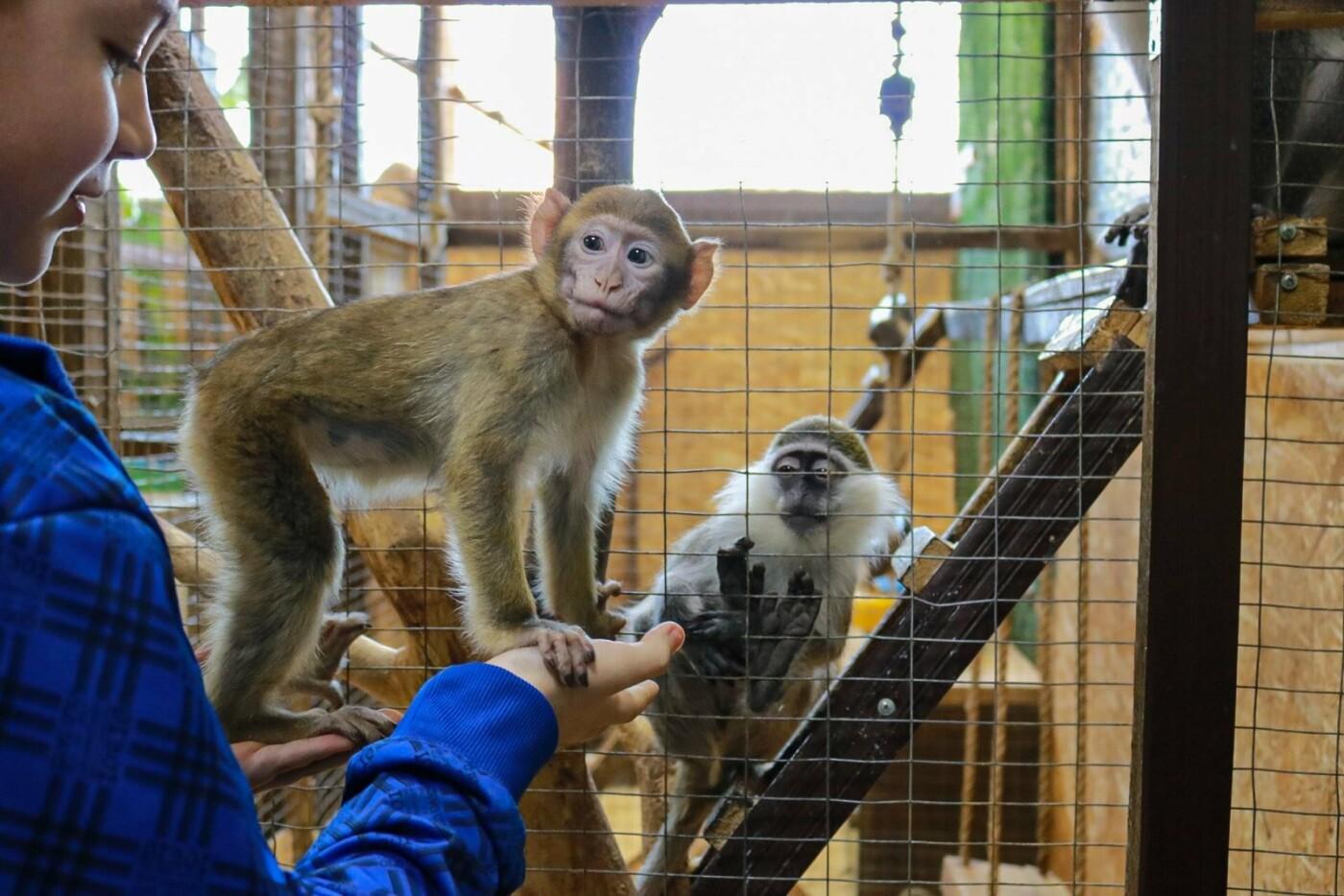 Контактный зоопарк просит помощи на время карантина!, фото-2