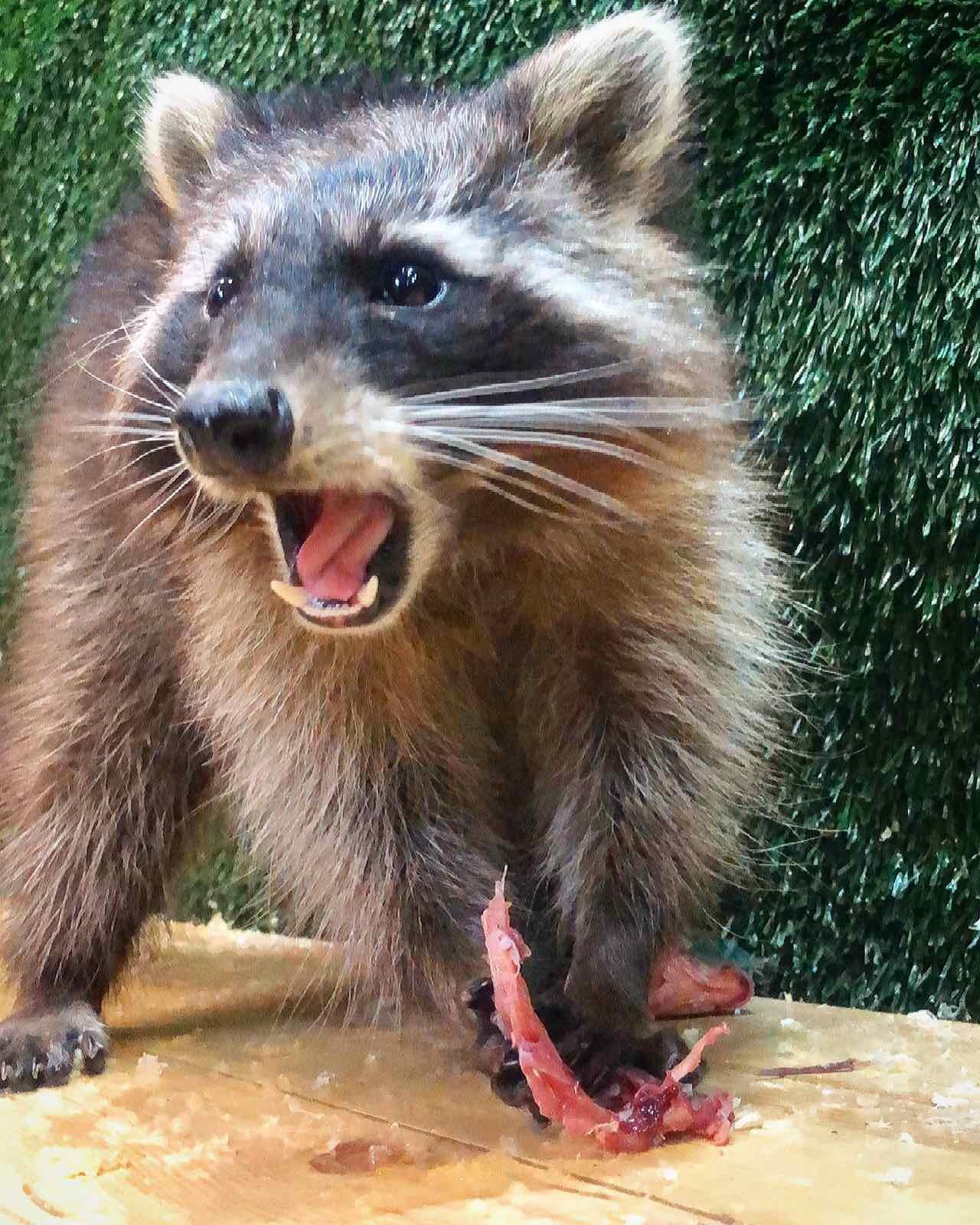 Контактный зоопарк просит помощи на время карантина!, фото-5