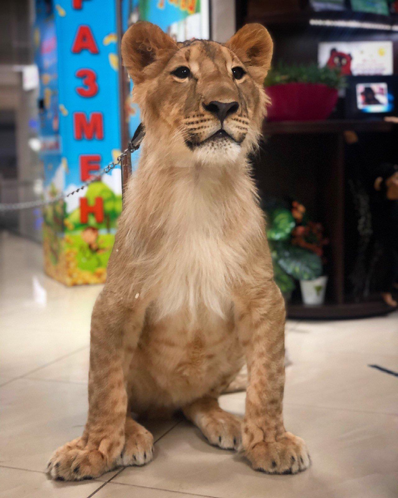 Контактный зоопарк просит помощи на время карантина!, фото-1