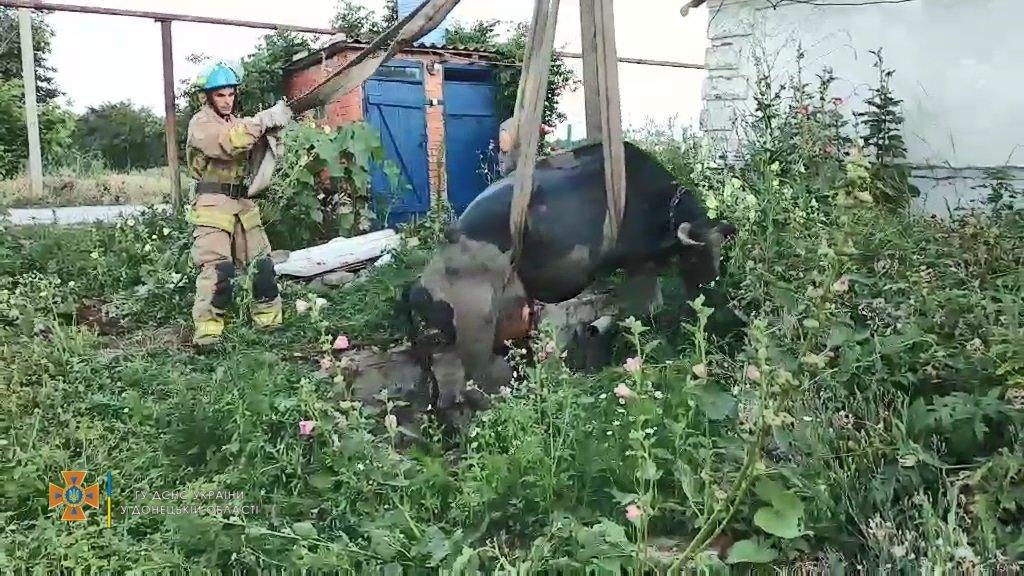 Як в Урзуфі корову з ями витягали, - ФОТО, ВІДЕО, фото-2